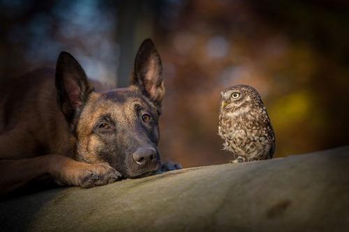 フクロウ「イッヌとずっと一緒にいるンゴ!」6