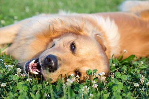 春の訪れを感じるような犬+花の画像5