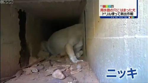 壁の穴にはまった野良犬ニッキを救え2