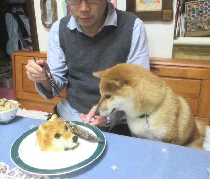 ケーキで作ったブルドッグすげえええ3