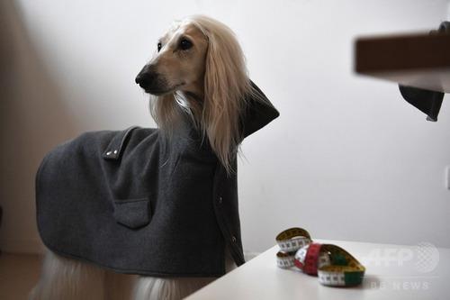 ミラノでは犬もオートクチュール4
