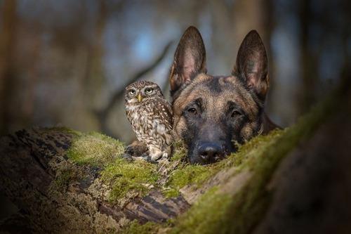 フクロウ「イッヌとずっと一緒にいるンゴ!」