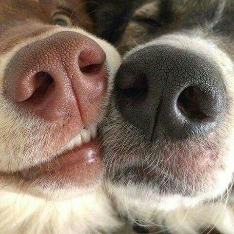 【フェチ】深夜の犬の鼻写真部【濡れ濡れ】12