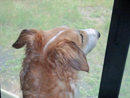 犬の後頭部を愛でて現実逃避しようぜ10