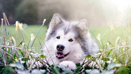春の訪れを感じるような犬+花の画像11