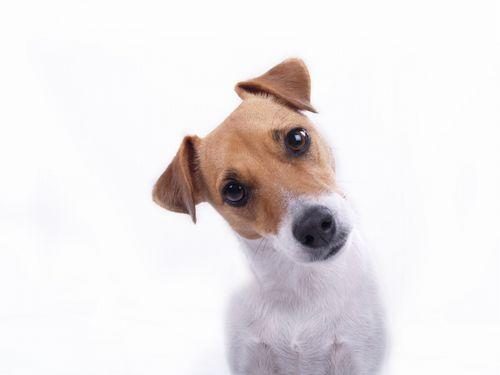 散歩中の犬「何でワイのご主人は・・・」