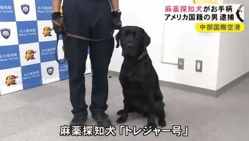 お座りでお手柄! 麻薬探知犬が隠された大麻草を発見2