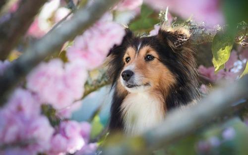 春の訪れを感じるような犬+花の画像20