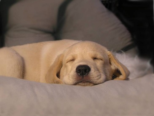 気持ち良さそうに寝てる犬の寝顔って良いよね24