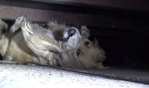人間に怯える捨て犬が保護されて人間の優しさに触れた結果
