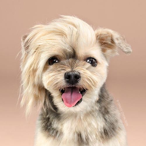 これより第一回美犬コンテストを開催します
