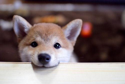 ほっこりする犬コピペを集めてみる その1