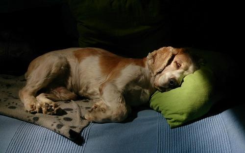 気持ち良さそうに寝てる犬の寝顔って良いよね18