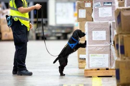 英空港の探知犬チーム、発見物はチーズやソーセージばかり