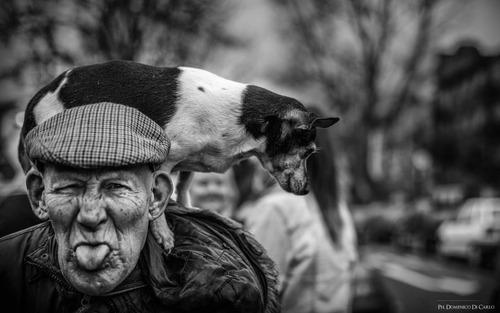 「犬 + お爺ちゃん」とかいう至高の組み合わせ5