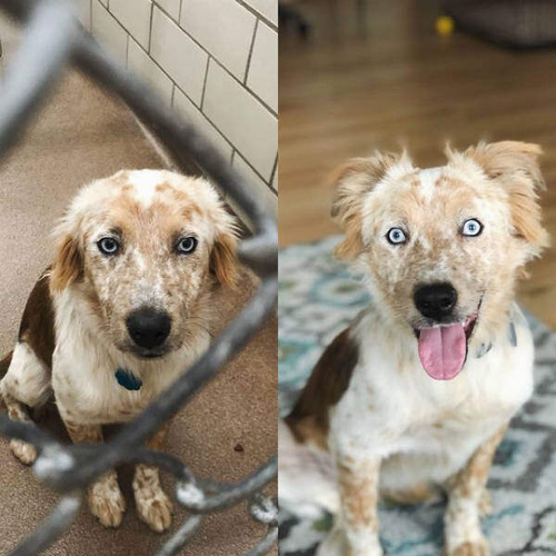 里親が見つかった保護犬、表情が別物になる