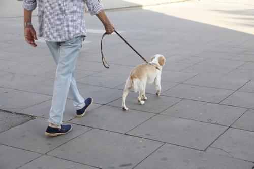 真夏の日中に犬を散歩させてる馬鹿