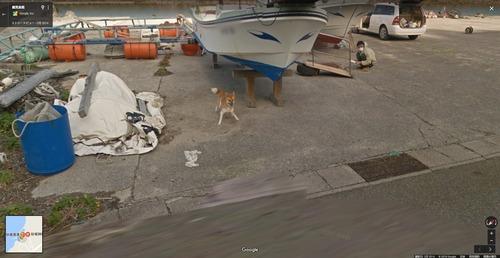 【悲報】googleカーさん、犬に追いかけ回される