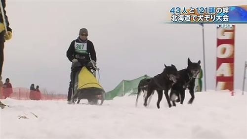 """北海道で犬ぞり大会…""""犬たちの甲子園"""""""