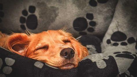 気持ち良さそうに寝てる犬の寝顔って良いよね6