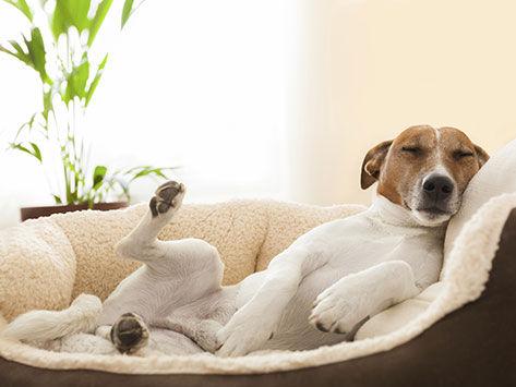 気持ち良さそうに寝てる犬の寝顔って良いよね2