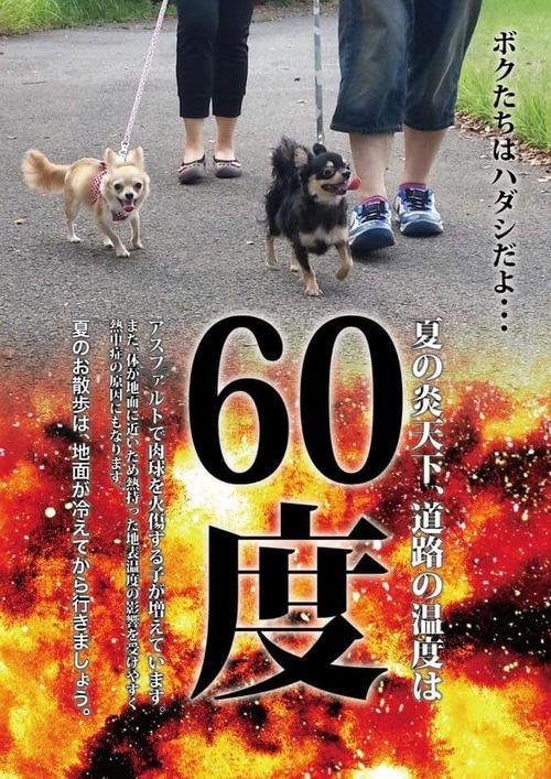 真夏の日中に犬の散歩をしている飼い主