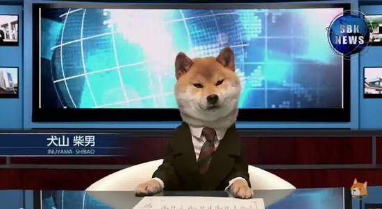 柴犬の犬山柴男キャスターが可愛すぎる