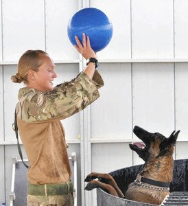 「今度は私たちが救う」大勢の命を救った爆発物探知犬、兵士らが集めた37万人の署名により殺処分が見直される