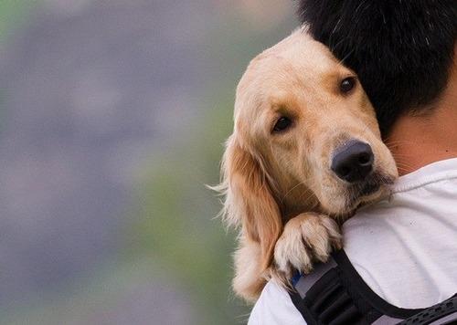 男「俺は犬派」 女「抱いて」
