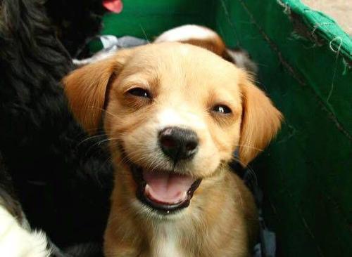 笑顔の雑種犬でも見てホンワカしようぜ