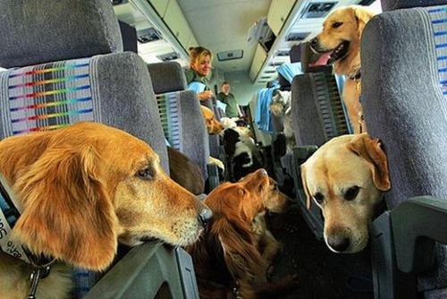 愛犬と並んで空の旅