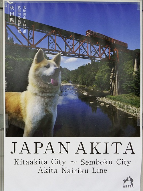 秋田県のポスターの秋田犬が可愛すぎる11