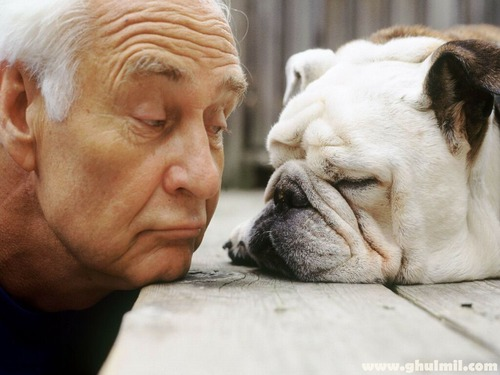 「犬 + お爺ちゃん」とかいう至高の組み合わせ12