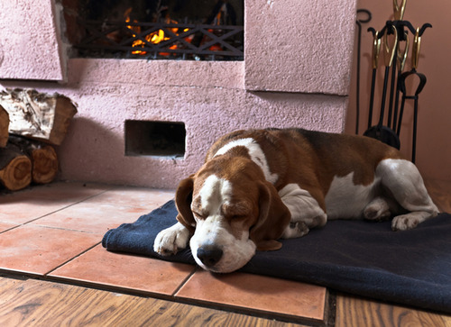 気持ち良さそうに寝てる犬の寝顔って良いよね8