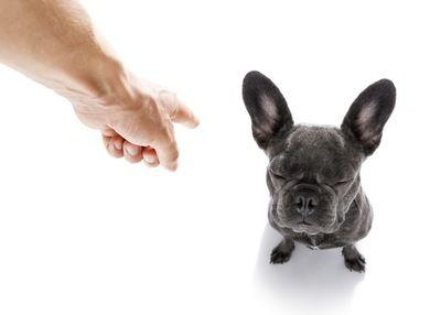日本の大学が犬のリモコン操作に成功