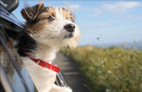 車の窓から顔を出して風と戯れる犬画像6