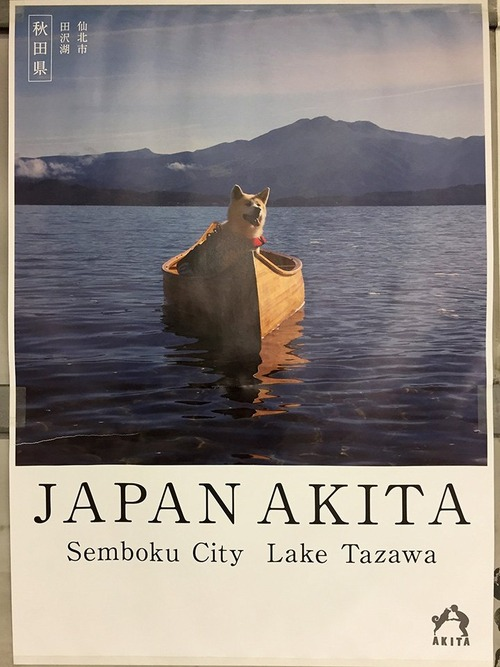 秋田県のポスターの秋田犬が可愛すぎる4