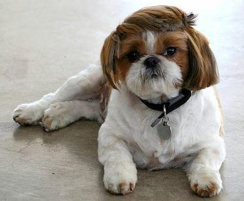 これより第一回美犬コンテストを開催します3