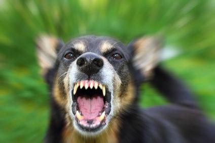 犬「ワン!!!」