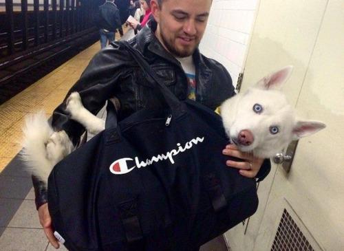 NY地下鉄「バッグに入らない動物の持ち込み禁止!」2