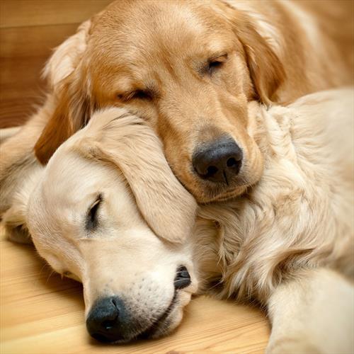 気持ち良さそうに寝てる犬の寝顔って良いよね21