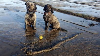 【わんわんお】飼い犬が魚竜の化石発見 新種なら名前の由来に? 英国