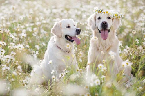 春の訪れを感じるような犬+花の画像4