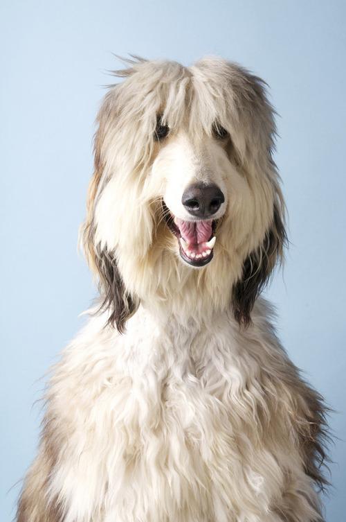 これより第一回美犬コンテストを開催します8