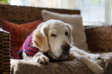 犬は老犬期が一番かわいい