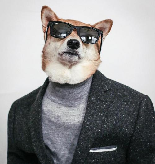 これより第一回美犬コンテストを開催します20
