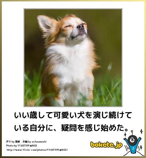 動物のボケて画像貼りましょう5