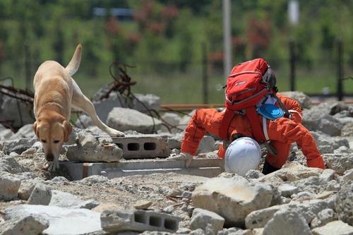 救われた犬 人救う