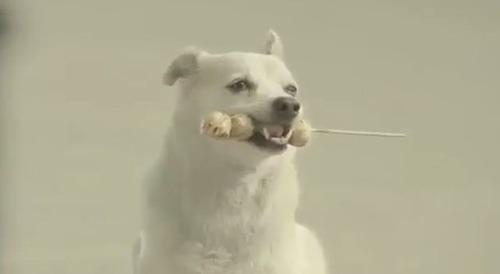 【動画】恩返しをする犬