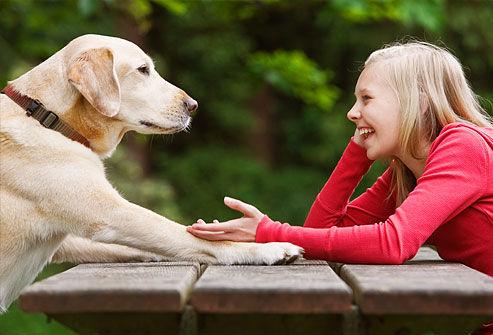犬に話しかけてる飼い主wwwwwwwww